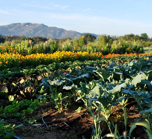Rancho La Puerta Spa: The beautiful organic gardens where all the food comes from ...