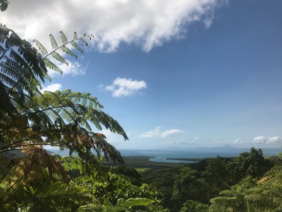 Daintree, Australia: Best half day tour