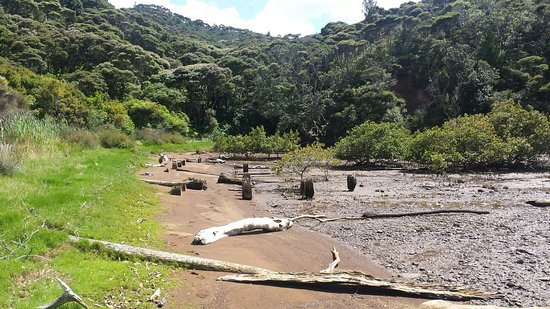 Aotea Track: Remains of wharf at old Kauri mill_large.jpg