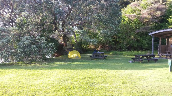 Aotea Track: Tent up at The Green_large.jpg