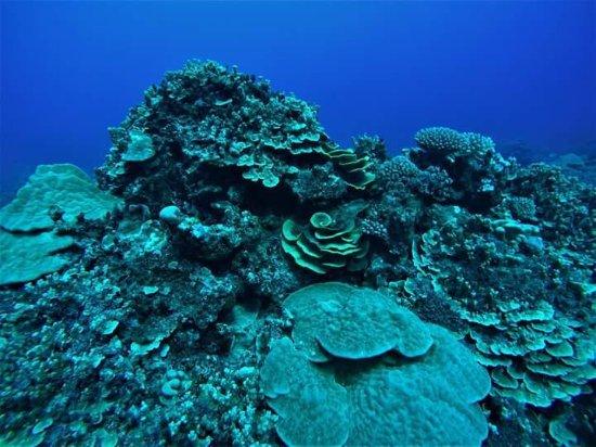 Dive Rarotonga: FB_IMG_1497404375759_large.jpg