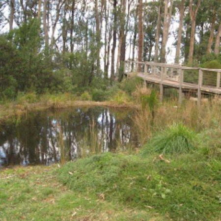 Kalorama, Australien: Karwarra Australian Plant Garden