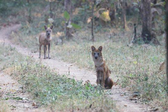 Yavatmal, India: Tipeshwar wildlife sanctuary