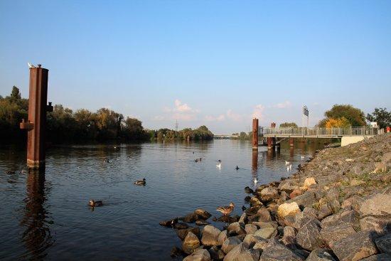 Hoell am Main: River Main