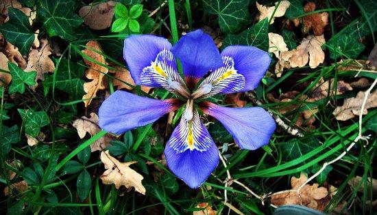 Пиргос, Греция: Nature and its colours