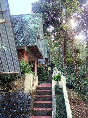 Misty Woods Fairytale Cottages