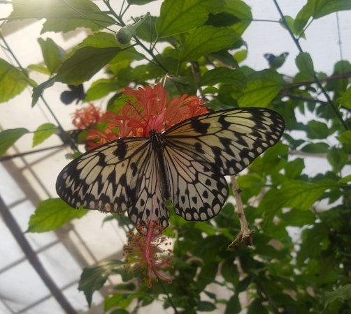 Papillon sur fleur picture of la serre aux papillons la - Papillon fleur ...