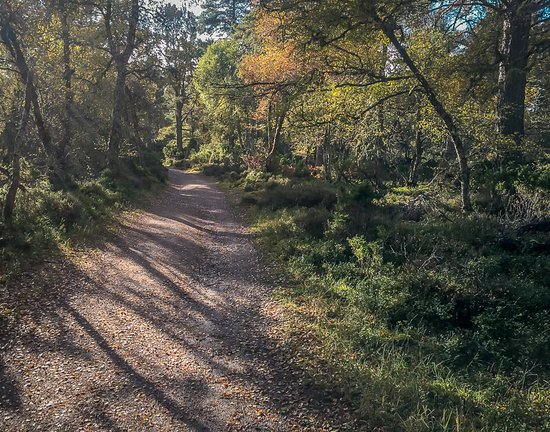 Aviemore, UK: A colourful combination of Autumn colours and shadows