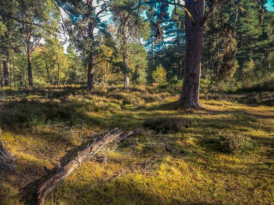 Aviemore, UK: The forest floor has its own charm
