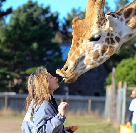 B Bryan Preserve : Never thought I would get a giraffe kiss!