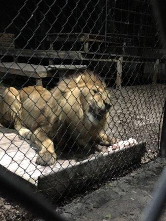 Catty Shack Ranch Wildlife Sanctuary: Freddy enjoying dinner