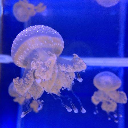 The Maritime Aquarium: photo0.jpg