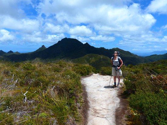 Great Barrier Island, Yeni Zelanda: Off to conquer Hirakimata - Mt Hobson