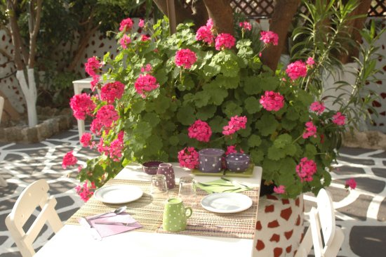 having breakfast surrounded by flowers is priceless picture of