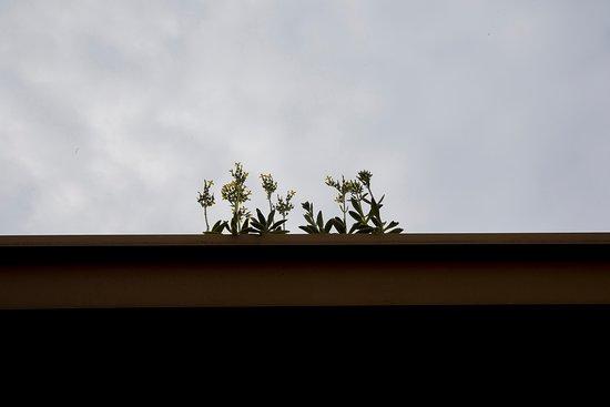 Moru Lane: 努力向上生長的小花