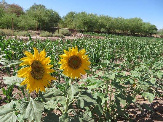 Tierra Atacama Hotel & Spa: extensive gardens on the property