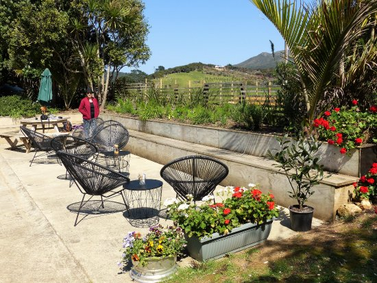 Great Barrier Island, Νέα Ζηλανδία: Courtyard of The Fat Puku, now has sun umbrellas and more seating opportunities