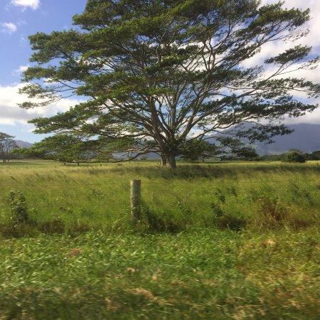 Wailua Falls: photo1.jpg