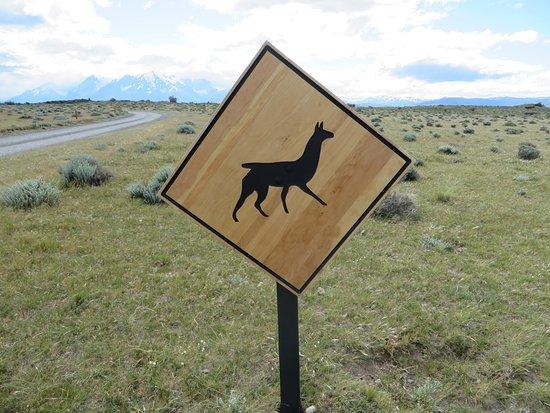 Tierra Patagonia Hotel & Spa: Guanaco crossing