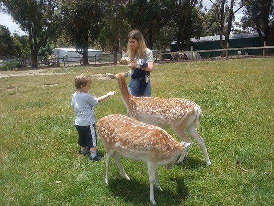 Hahndorf, Australien: Friendly deer