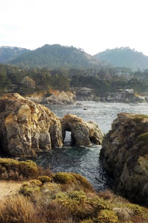 Point Lobos State Reserve: Too cool