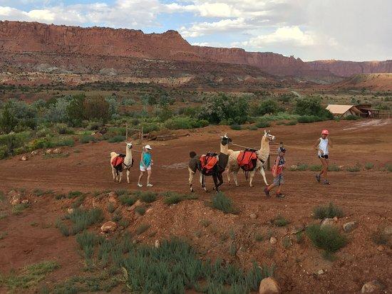 Torrey, UT: Llama hike