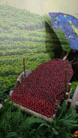 Festa de Flores e Morangos de Atibaia: Carriola de morangos