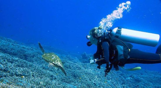 Mataram, Indonesia: Diving at Gili Trawangan