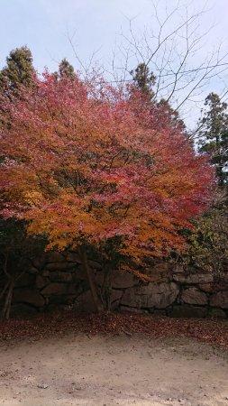 Beomeosa-Tempel: 美麗楓葉