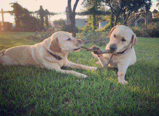 โพโคลบิน, ออสเตรเลีย: Resident Cellar Door Dogs - Vodka & Muscat