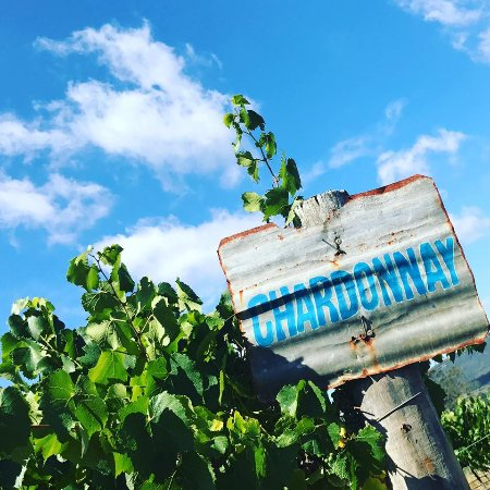 โพโคลบิน, ออสเตรเลีย: Hanging Tree Wine Chardonnay - Estate Grown