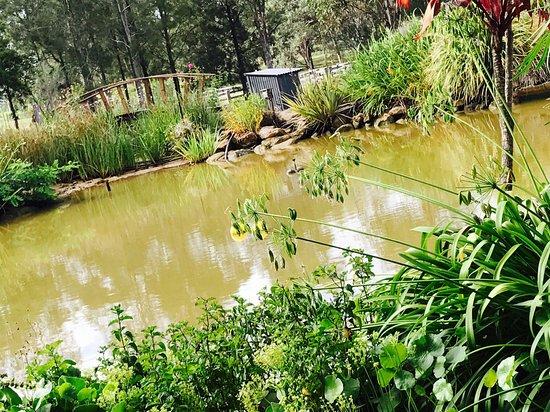 Pokolbin, Australia: Hanging Tree Wine - Koi Pond