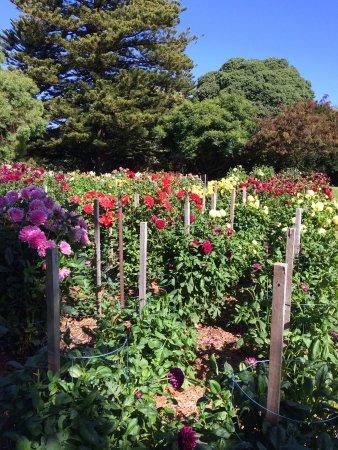 Portland, أستراليا: Flowers