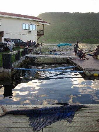 Kolonia, Negara Federasi Mikronesia: A fishing tourney that took place beside our hotel.