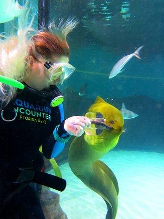 Florida Keys Aquarium Encounters (Marathon) - 2019 All You