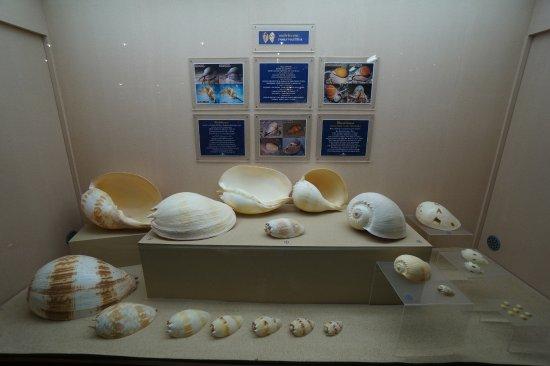 Shell World Museum: เปลือกหอยสวยๆ ทั้งนั้นเลยค่ะ