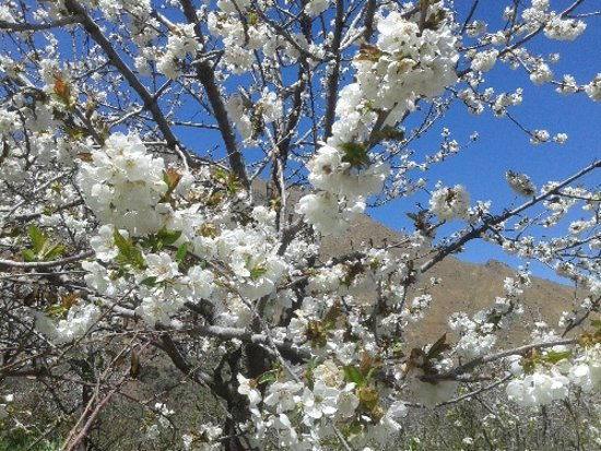 Lalla Takerkoust, Marocko: Spring Blossom