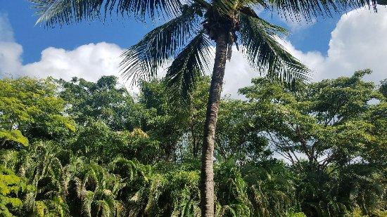 IBEROSTAR Paraiso Del Mar: 20171209_112057_large.jpg