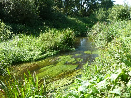 West Stow Country Park and Anglo-Saxon Village: View of the River Lark from the footpath a stunning rejuvenation Aug 2017