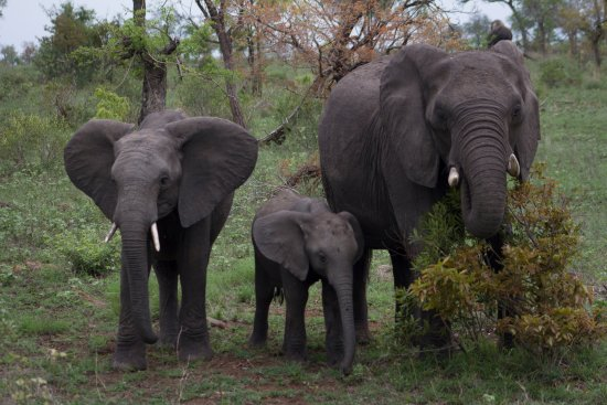 George, South Africa: Family of elephants!