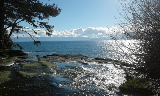 Sooke, Canadá: Photo taken in March 2017 on a tour with Mystic Beach Adventures in the Jordan River area.