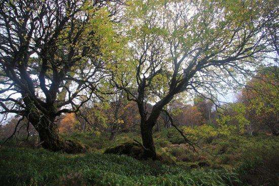 Aviemore, UK : Forest