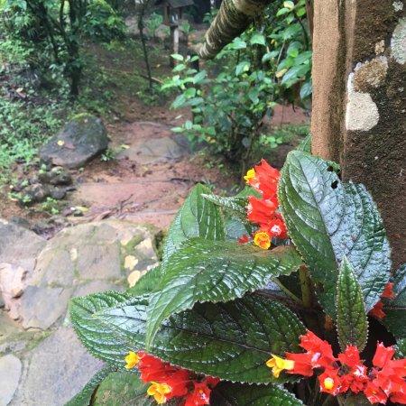 La Carolina Lodge: photo3.jpg