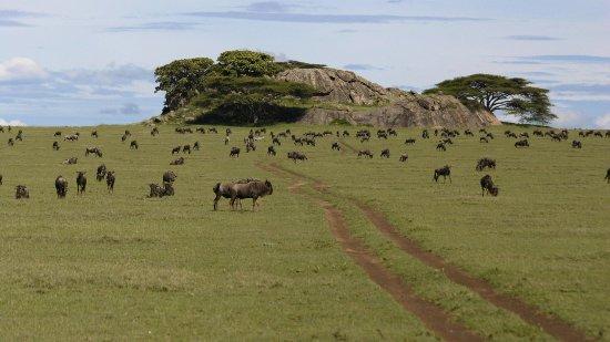 African Pride Safaris