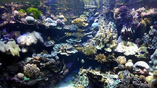 Aquarium des Lagons Nouvelle Caledonie Photo