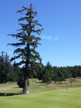 Reedsport, Oregón: One of several signature tall Firs standing watch over Forest Hills.