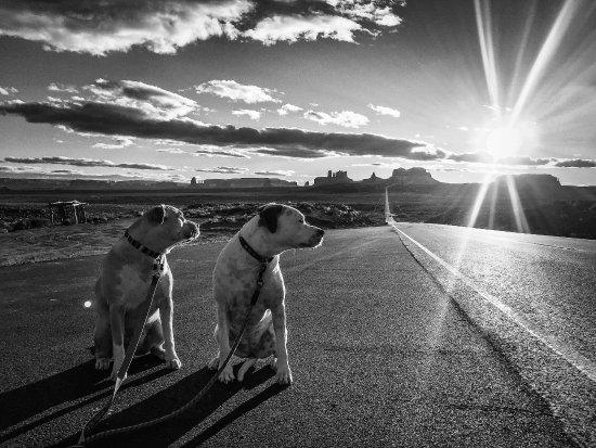 Kayenta, AZ: This photo was taken in Utah at Forrest Gump Point.