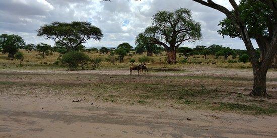 Tarangire National Park, Tanzanya: Tarangire Naitonal Park