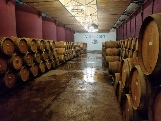 Viu Manent Winery: Wine Storage At Viu Manent