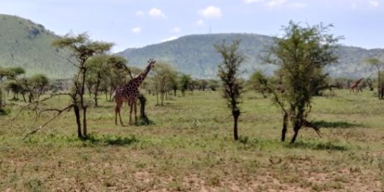 Serengeti National Park Central Area Around Seronera - 9 things to see and do in serengeti national park